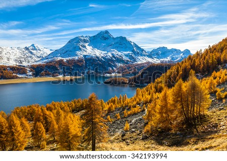 Stunning view of Sils lake and the Piz da la Margna swiss alps in Upper Engadine with golden trees  in autumn, Canton of Grisons, Switzerland. - stock photo