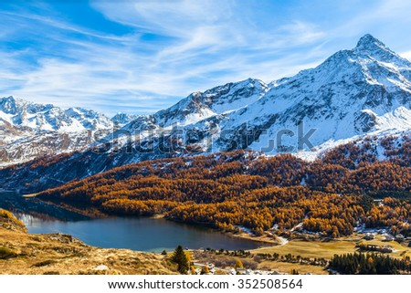 Stunning view of Sils lake and the swiss alps including the peak of Da La Margna in Upper Engadine with golden trees  in autumn, Canton of Grisons, Switzerland.