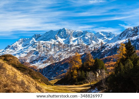 Stunning view of the swiss alps in Upper Engadine with golden trees in autumn, Canton of Grisons, Switzerland.