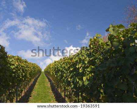 Stuttgart vineyards with blue sky and clouds