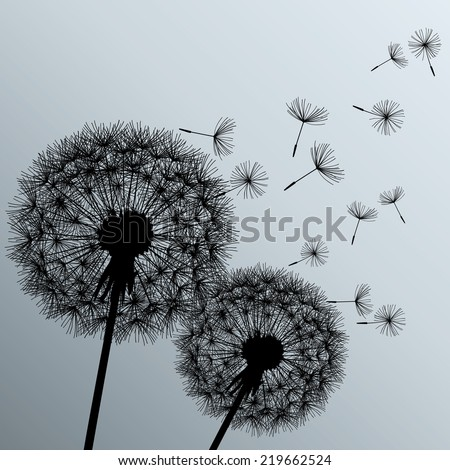 Stylish background with two black flowers dandelions on grey background. Beautiful trendy romantic wallpaper.  - stock photo