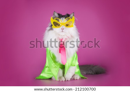 stylish brightly dressed cat on pink background - stock photo