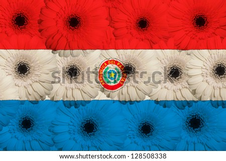 stylized national flag of paraguay with gerbera daisy flowers as concept and symbol of love, beauty, innocence, and positive emotions - stock photo