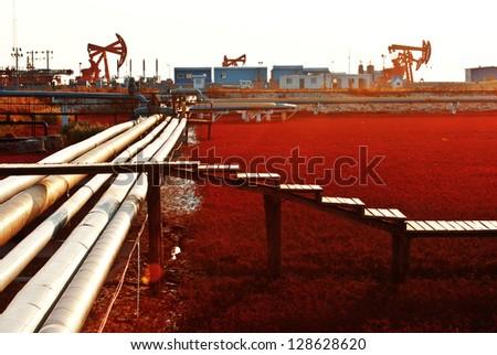 suaeda - stock photo