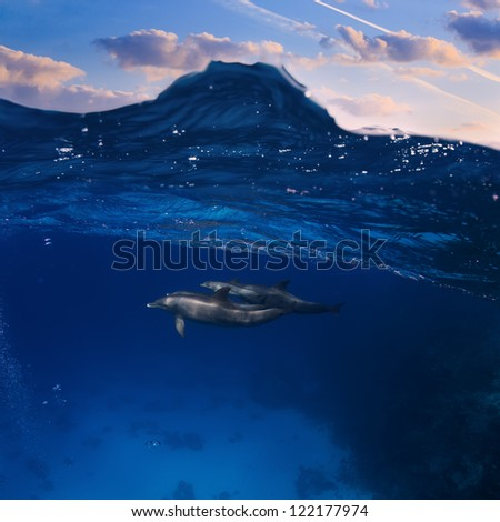 Submerged image splitted by waterline. A family of dolphins with a baby swimming underwater underneath of sea wave - stock photo
