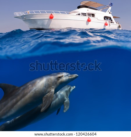 submerged image splitted by waterline two doplhins swimmimng underwater under dive boat - stock photo