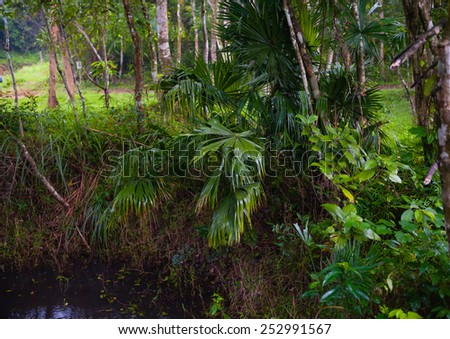 Subtropical forest in Vietnam