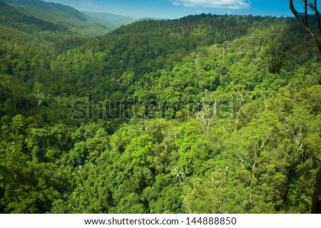 Subtropical rainforest in Springbrook national park, Gold Coast, Australia - stock photo