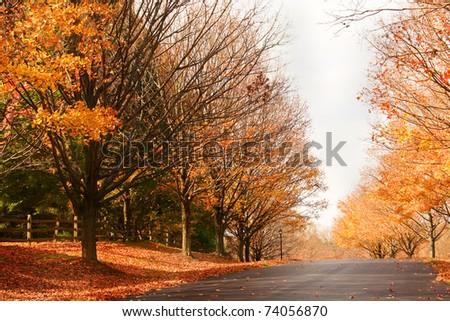 suburban road in the fall - stock photo