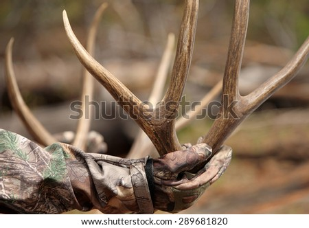 successful hunter holding harvested deer antlers close up