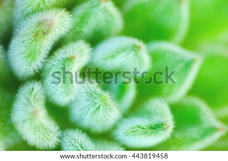 Succulent Cactus Plant detail In Garden. Green nature background. - stock photo