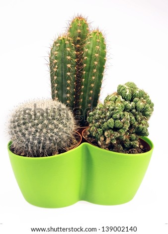 succulent cactus plants in a plastic green vase - stock photo