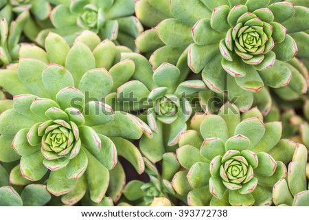 Succulent Cactus Plants In Garden - stock photo