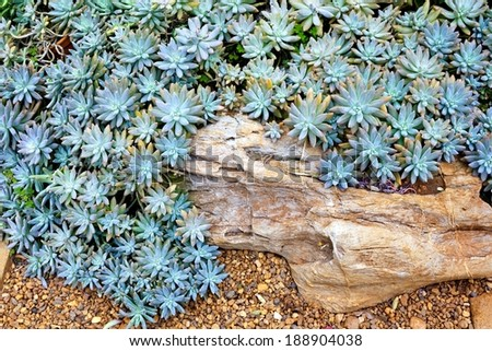 Succulent - green cactus flower background