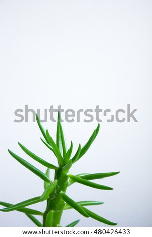 Succulent in flower pot, on grey background.