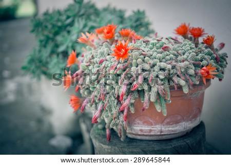 Succulent inthe garden - stock photo