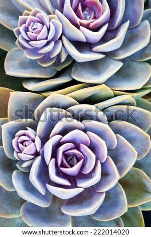 Succulent plant - stock photo