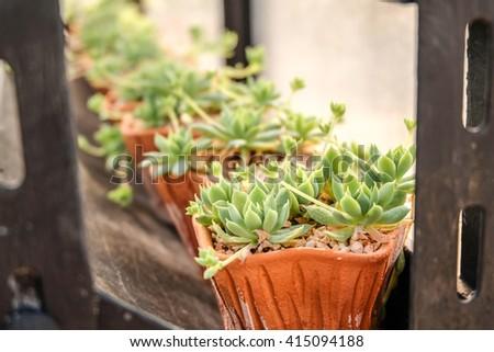 succulent plant in plot. - stock photo