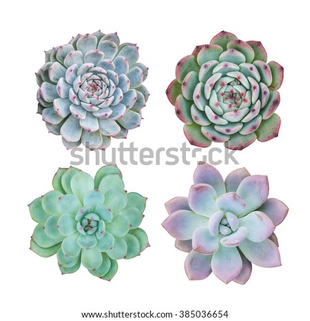 succulent plant in the desert collection - stock photo