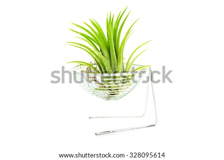Succulent plant white background. - stock photo
