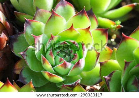 Succulent plants in the garden in the soft light