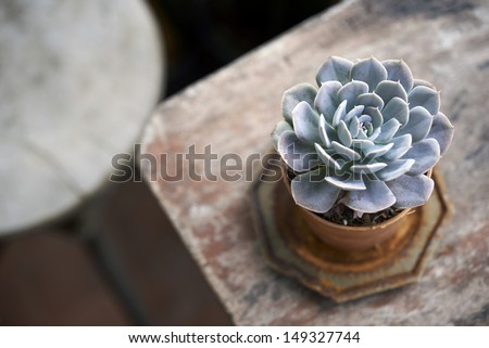succulent pot on wooden table and round shape chair - stock photo