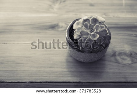 Succulent pot on wooden table in monochrome tones, Flowerpot on wooden table, View from above - stock photo