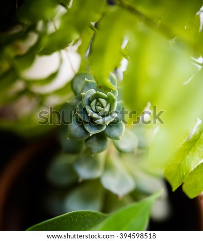 succulent through the leaves