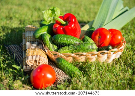 Succulent vegetables in the sunny summer evening