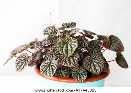 Succulents and cactus houseplants in a pot - stock photo