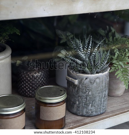 Succulents and cactus in different concrete pots on the white shelf. Scandinavian hipster home decoration - stock photo
