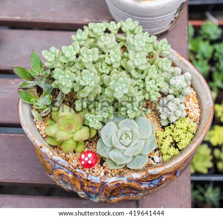 succulents in a planter - stock photo