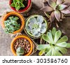 Succulents on old wooden background - stock photo