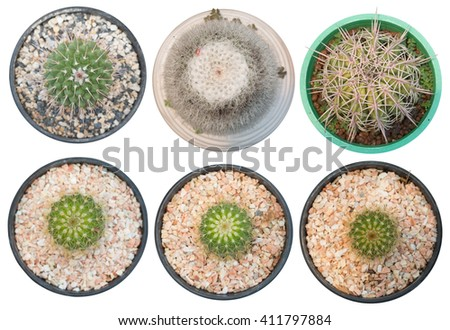 Succulents or cactus in pot isolated on white background(save path), overhead or top view. - stock photo
