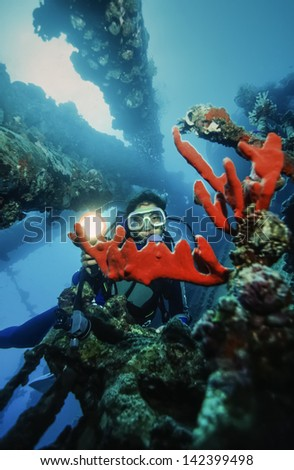 SUDAN, Red Sea, U.W. photo, Umbria wreck, diver and red sponges - FILM SCAN - stock photo
