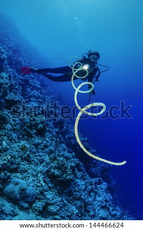 SUDAN, Red Sea, U.W. photo, Whip gorgonian (Junceella) - FILM SCAN - stock photo