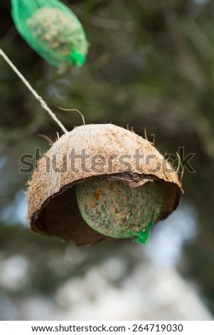 suet balls on a tree / Suet ball