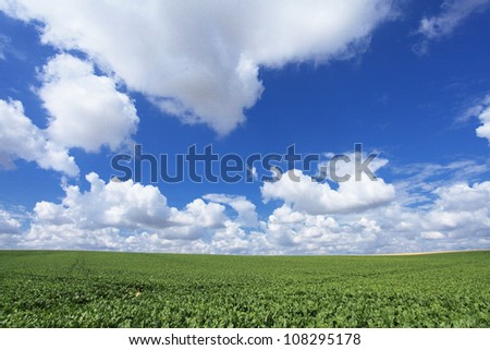 sugar beet fields in the summer sun - stock photo