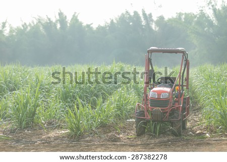 Sugar cane farm with tractor. - stock photo