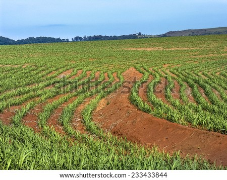 Sugar cane field with sky, in Brazil - stock photo