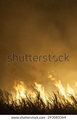 Sugar cane fire in Brazil - stock photo