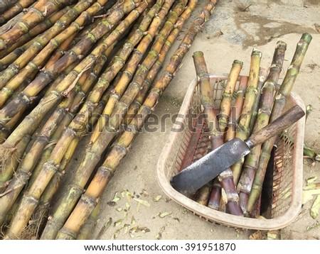 Sugar cane for sale at Sa-pa Vietnam - stock photo