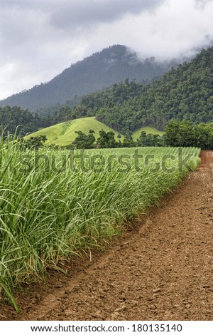 sugar cane North Queensland with mountians in background - stock photo
