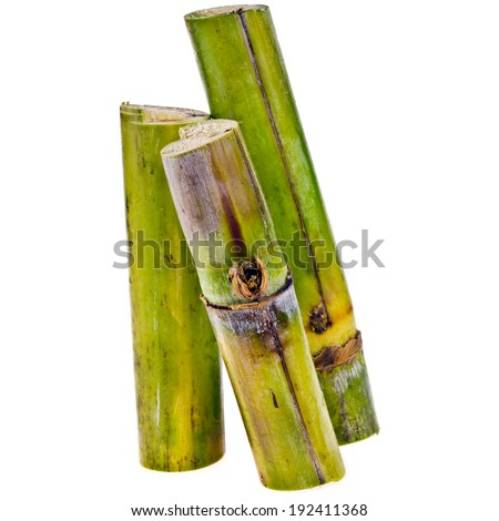 sugar cane - three pieces of fresh cut sugar cane, short stumps of sugarcane closeup  isolated on white background - stock photo