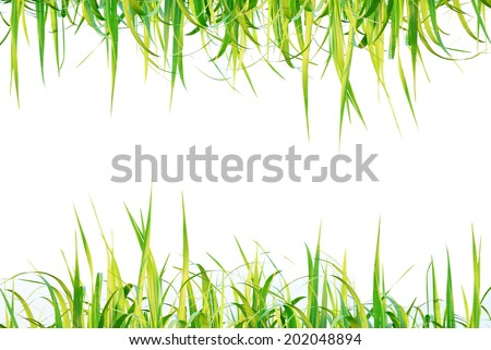 Sugar leaf on isolated white background good use for graphic designer - stock photo