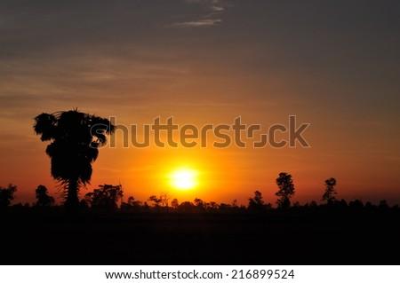 Sugar palm and rice filed at sunset - stock photo