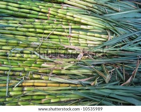 Sugarcane background - stock photo