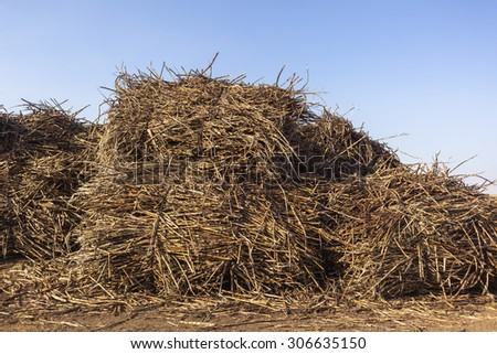Sugarcane Bundles Loading Yard Agriculture sugarcane bundles loading yard to factory mills.