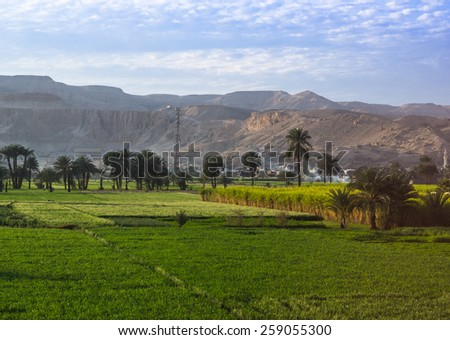 Sugarcane field on the bank of the Nile in Egypt. - stock photo