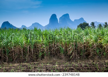sugarcane fields,a hill - stock photo